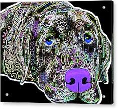 210b Labrador By Nixo Acrylic Print