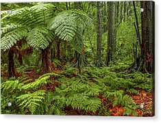 Acrylic Print featuring the photograph Jungle by Les Cunliffe