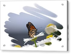 Butterfly Acrylic Print by Gerald Kloss