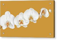 Moth Orchid Nursery Acrylic Print