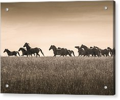 #2564 - Mortana Morgans Acrylic Print