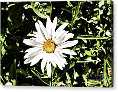 278 - Flower Series 1.4 Hdr Acrylic Print by Chris Berry