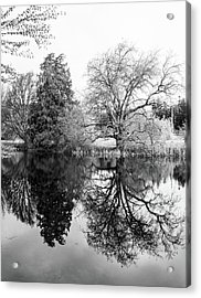 Two Trees Reflected - Bw Acrylic Print by Marilyn Wilson