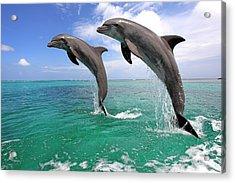 Delfin (grosser Tuemmler) Acrylic Print by Tier Und Naturfotografie J und C Sohns