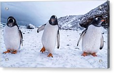 Acrylic Print featuring the photograph 3 Amigos by Rand