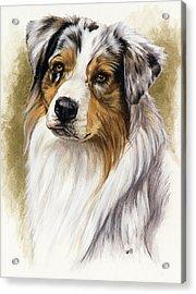 Australian Shepherd Acrylic Print by Barbara Keith