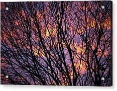 Autumn Sky Acrylic Print by Konstantin Dikovsky