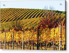 Acrylic Print featuring the photograph Autumn Vines by Bill Robinson