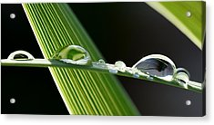 Big Rain Drops On Leaf Acrylic Print by Werner Lehmann