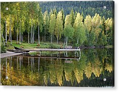 Birches And Reflection Acrylic Print by Aivar Mikko