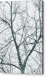 Blizzard Acrylic Print by JAMART Photography
