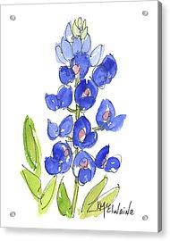 Bluebonnet Acrylic Print by Kathleen McElwaine