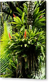 Bromeliads El Yunque National Forest Acrylic Print