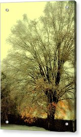 Bronze Gilding Acrylic Print by JAMART Photography