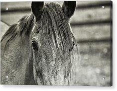 Buckskin Black And White Acrylic Print by JAMART Photography