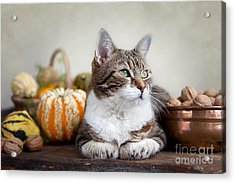 Cat And Pumpkins Acrylic Print by Nailia Schwarz