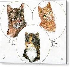 3 Cats For Juda Acrylic Print