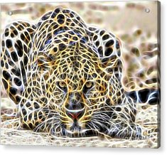 Cheetah Collection Acrylic Print by Marvin Blaine