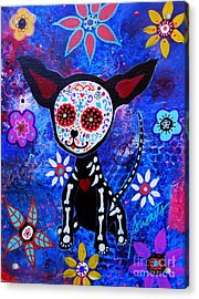 Chihuahua Day Of The Dead Acrylic Print by Pristine Cartera Turkus