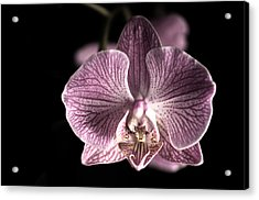 Close Up Shoot Of A Beautiful Orchid Blossom Acrylic Print