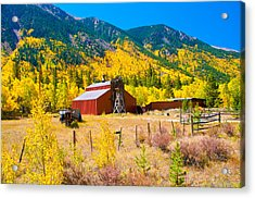 Colorado Aspen Trees Acrylic Print by Terry Runion