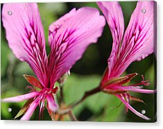 3-d Flowers Acrylic Print by Jean Booth