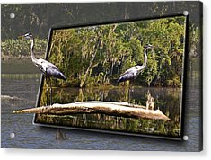 3-d Great Blue Crane Acrylic Print by Michael Whitaker