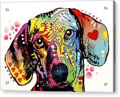Dachshund Acrylic Print by Dean Russo