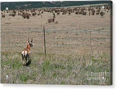 Deer Acrylic Print by Terry Runion