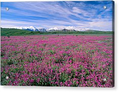 Denali National Park Acrylic Print by John Hyde - Printscapes
