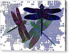 3 Dragonfly Acrylic Print by Jack Zulli
