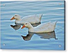 Acrylic Print featuring the photograph 3- Ducks by Joseph Keane