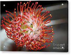 Exotic Flower Acrylic Print