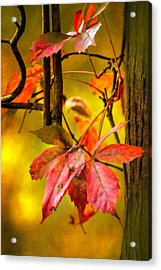 Fall Colors Acrylic Print by Eduard Moldoveanu