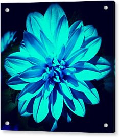 Flower Acrylic Print by Katie Williams
