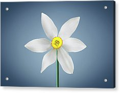 Acrylic Print featuring the photograph Flower Paradise by Bess Hamiti