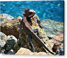 Green Iguana Acrylic Print by Anthony Dezenzio