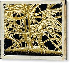 Grounded In Earth  - Series 1 Acrylic Print by Debra     Vatalaro