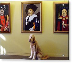 Gunther At His Show  Acrylic Print by Diane Daigle