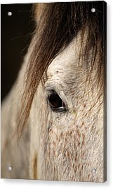 Horse Portrait Acrylic Print by Ian Middleton