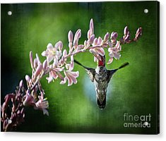 Hummingbird  Acrylic Print by Saija  Lehtonen