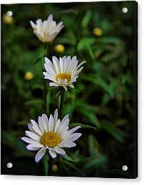 Acrylic Print featuring the photograph 3 In A Row by Cherie Duran