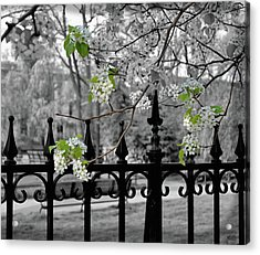 Joyce's Spring Time Acrylic Print by JAMART Photography
