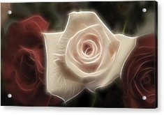 3 Little Roses For Patrice Acrylic Print by Kevin  Sherf