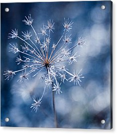 Lonely Winter Acrylic Print by Ryan Heffron