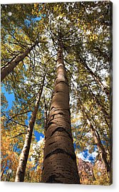 Looking Up Acrylic Print by Marilyn Hunt
