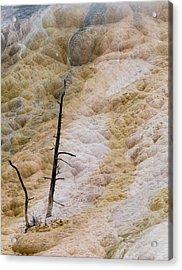 Mammoth Hot Spring Terraces Acrylic Print