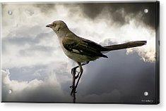 Mockingbird Acrylic Print by Brian Wallace