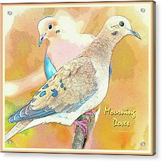 Mourning Dove Pair  Acrylic Print by A Gurmankin