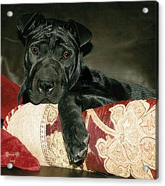 Ms. Raisin Acrylic Print